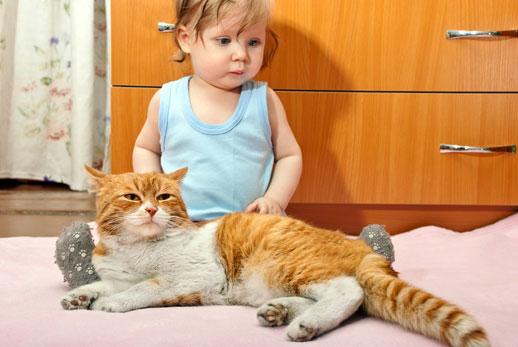 Nino con gato