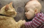 Preparar la llegada del bebé a una casa con gato
