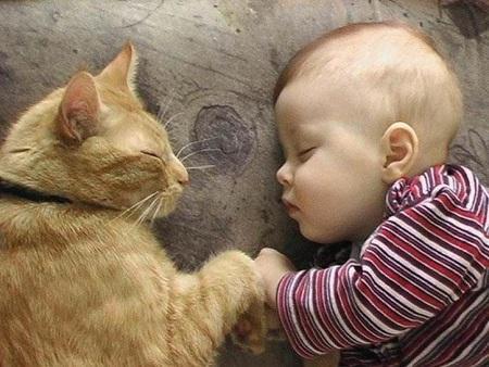 bebes-gatos-L-n4iymQ.jpeg