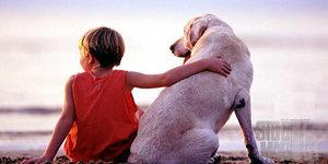 Actuación del niño frente a un perro nervioso