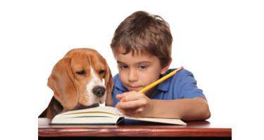 nino-haciendo-deberes-con-el-perro