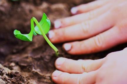 Taller infantil sobre agricultura en La Grajera