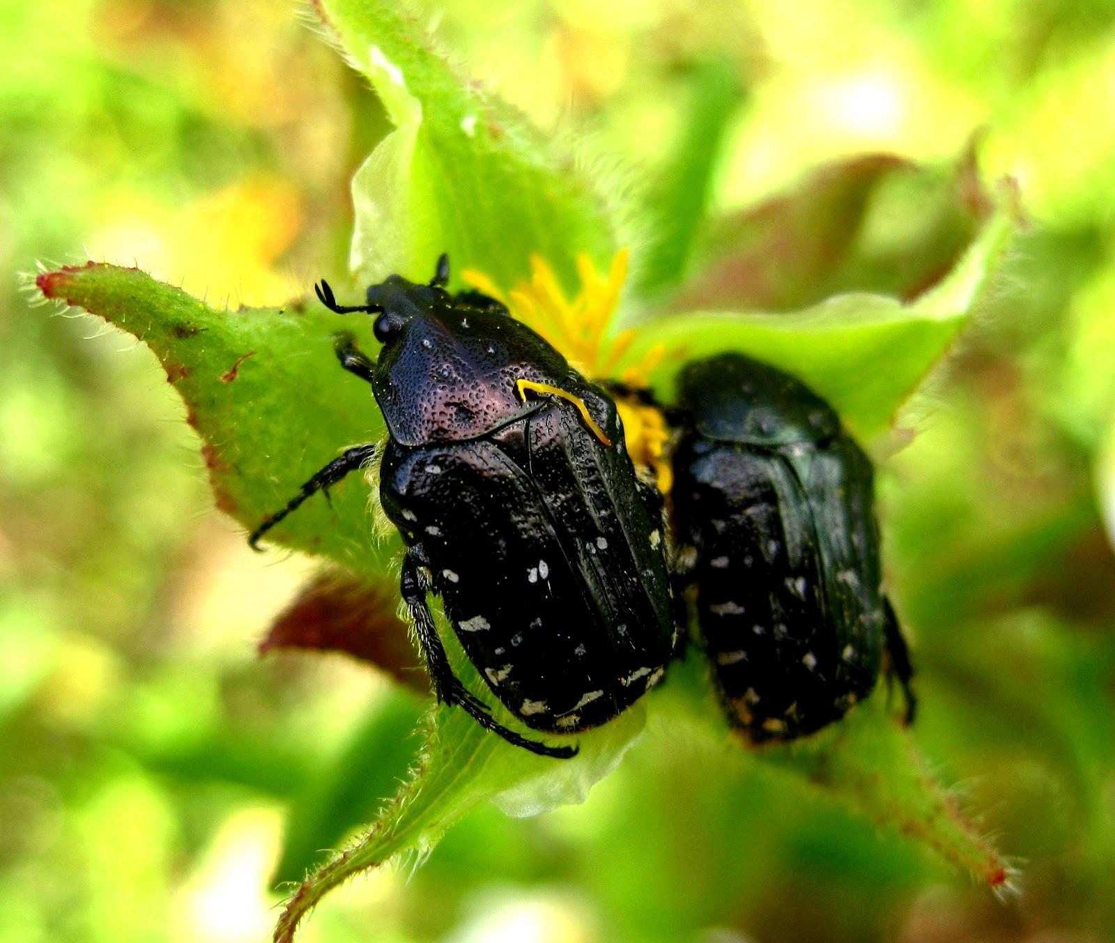 Conoce los insectos del Parque Cebollera