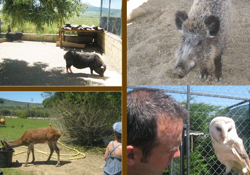 Animales de Rioja Natura