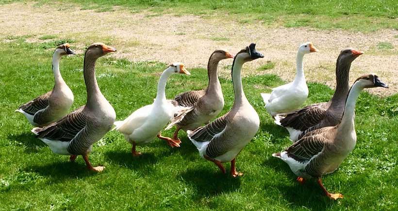 patos-rioja-natura