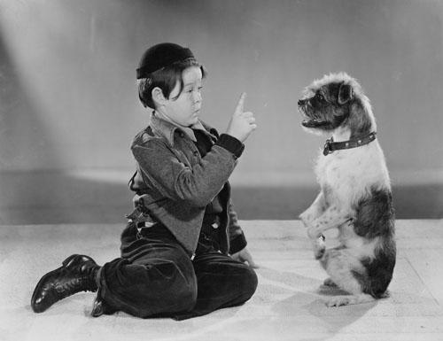 Juegos entre niños y perros. Perrygatos