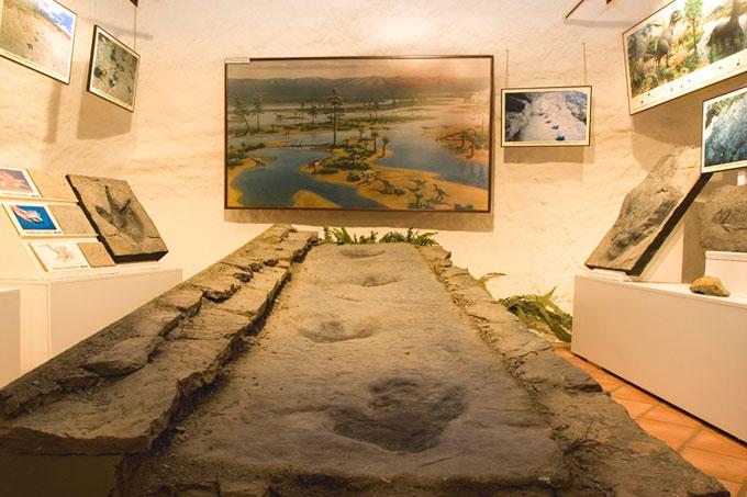 Exposición de minerales y fósiles en Arnedo