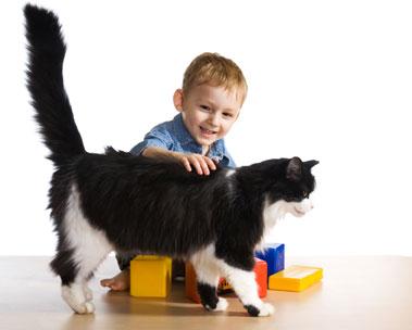Juegos seguros entre niños y gatos