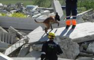 Exhibición de salvamento con perros de rescate