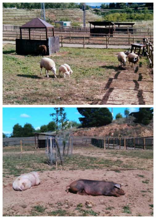 animales granja la grajera