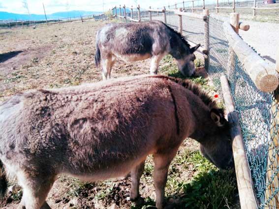 burros-granja-la-grajera