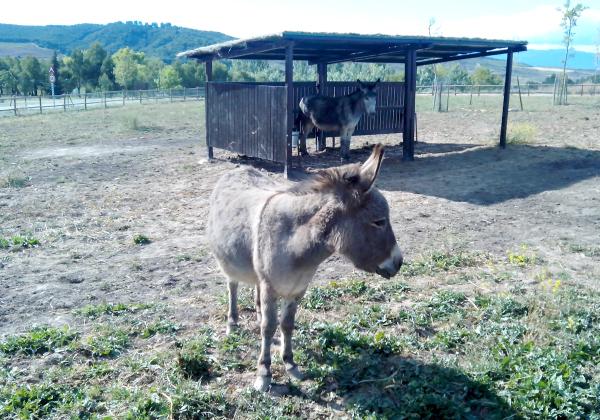 burros la grajera