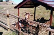 Visitamos la granja de La Grajera