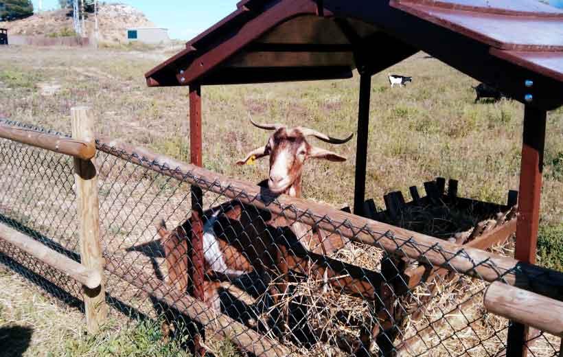 La granja de La Grajera recibe a sus inquilinos
