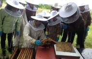 Visita las colmenas de Campomiel