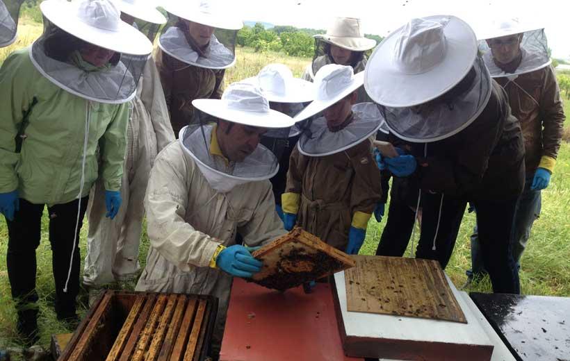 Las abejas, profesores por un día