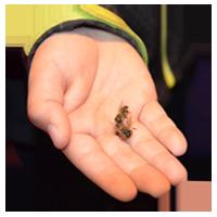 abejas-campomiel