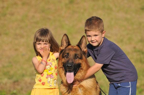 perros-y-niños