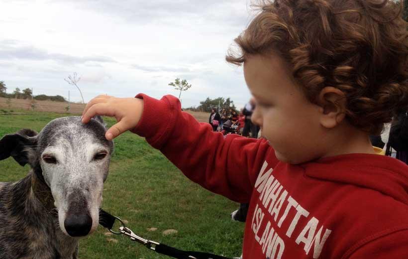 ¿Amáis los animales? Participa en el ADOPTACAN 2014