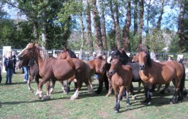 Escapada en familia a la XV Feria ganadera de Ojacastro