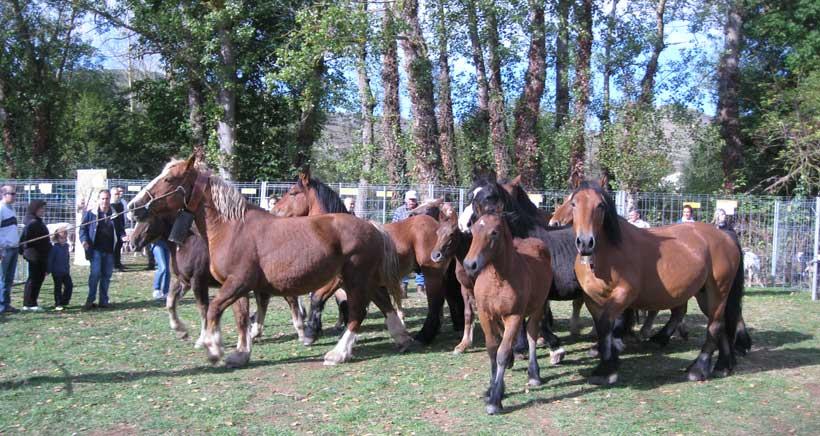 Escapada en familia a la XVII Feria ganadera de Ojacastro