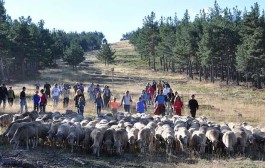 Conviértete en pastor, en la XIII Fiesta de la Trashumancia