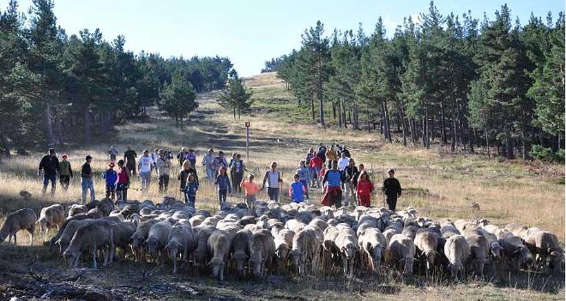 Conviértete en pastor, en la XV Fiesta de la Trashumancia