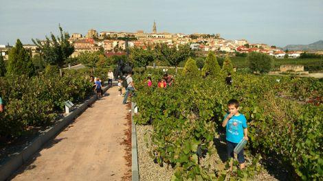 Enseñándoles a amar el vino desde Vivanco