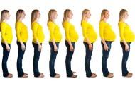 Evolución del embarazo, mes a mes