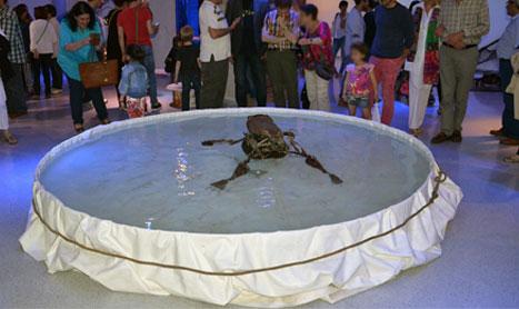Vida Acuática, exposición en el Museo Würth