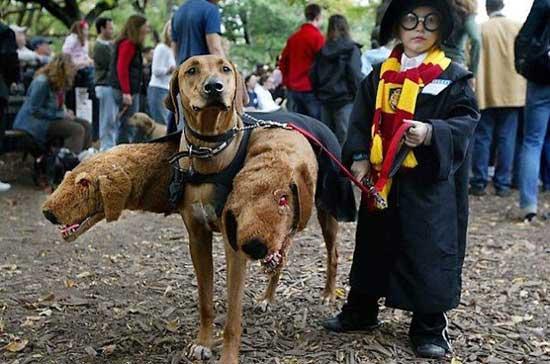 disfraz-perro-harry-potter