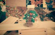 Construye invernaderos en los talleres de Vivanco Kids