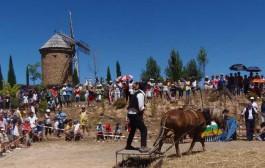 15ª Fiesta de la Molienda de Ocón