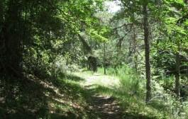 Paseo guiado gratuito por Sierra Cebollera