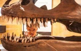 Súbete al Dinobús y conoce a los dinosaurios de La Rioja