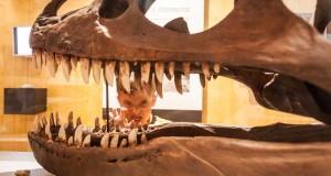 Subete Al Dinobus Y Conoce A Los Dinosaurios De La Rioja En sus bosques de nothofagus y podocarpáceas viven animales migratorios, dinosaurios sedentarios adaptados a los fríos inviernos y algunas reliquias del pasado, como los anfibios laberintodontes. dinosaurios de la rioja