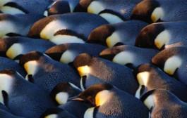 Las mejores imágenes de la Antártida