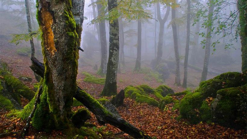 Paseo por un bosque de cuento