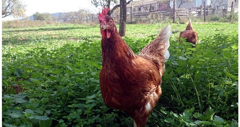 Celebra el Día del Huevo en una granja ecológica
