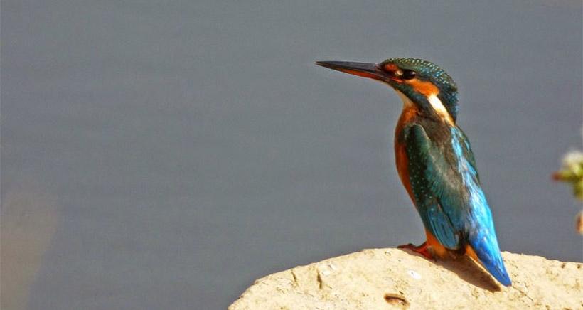 Día de las aves en La Grajera