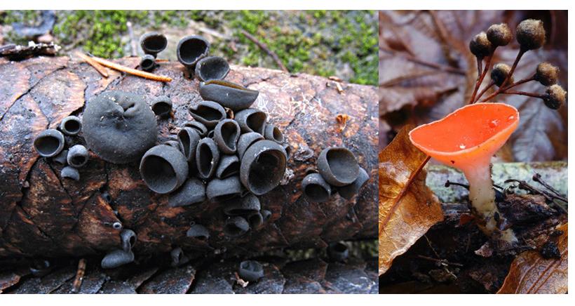 Taller sobre setas y hongos en la Casa de las Ciencias