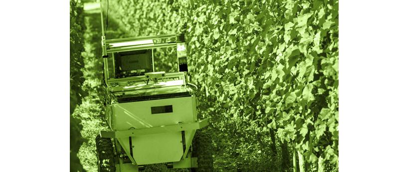 ¿Cómo funciona un robot en una viña?