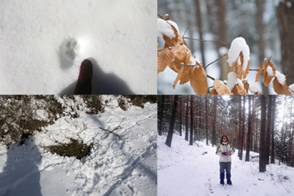 Sábado de rastros y nieve en Ribavellosa