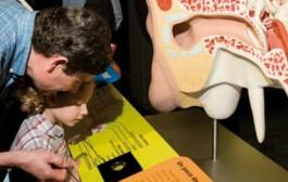 'Inaudito, la aventura de oír', nueva exposición en la Casa de las Ciencias
