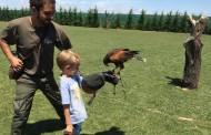 'Tierra Rapaz', parque de aves rapaces en Calahorra