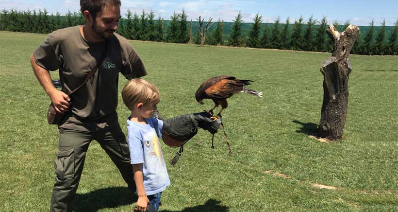 Tierra Rapaz, parque de aves rapaces en Calahorra