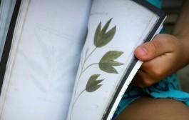 Aprende a hacer un herbario en los talleres de La Grajera
