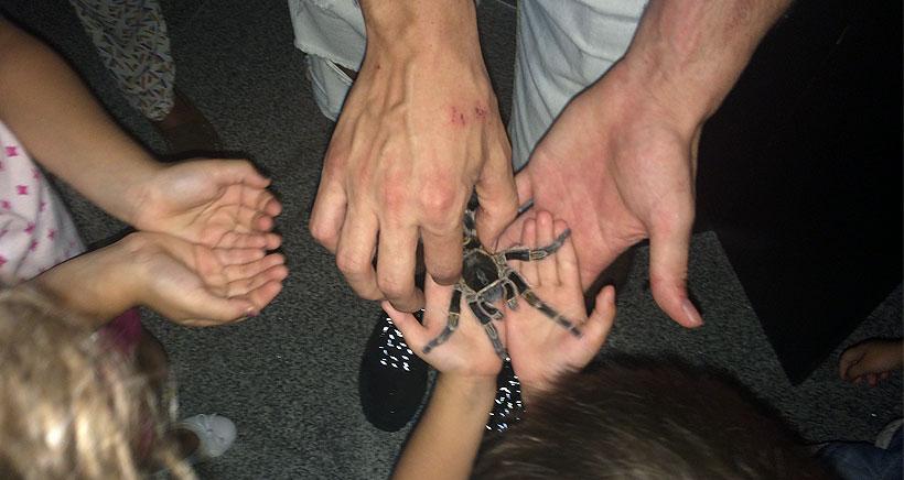 Exposición de arañas y escorpiones vivos en la Casa de las Ciencias