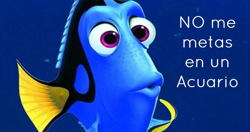 La película Buscando a Dori puede hacer peligrar al pez cirujano azul