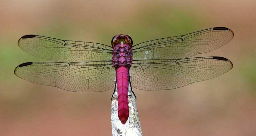 Conoce las libélulas y los caballitos de agua en esta excursión a Sierra Cebollera